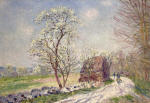 Along the Woods in Spring