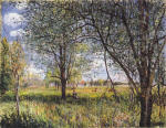 Willows in a Field Afternoon
