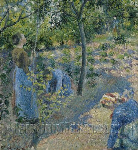 Apple Picking 1881