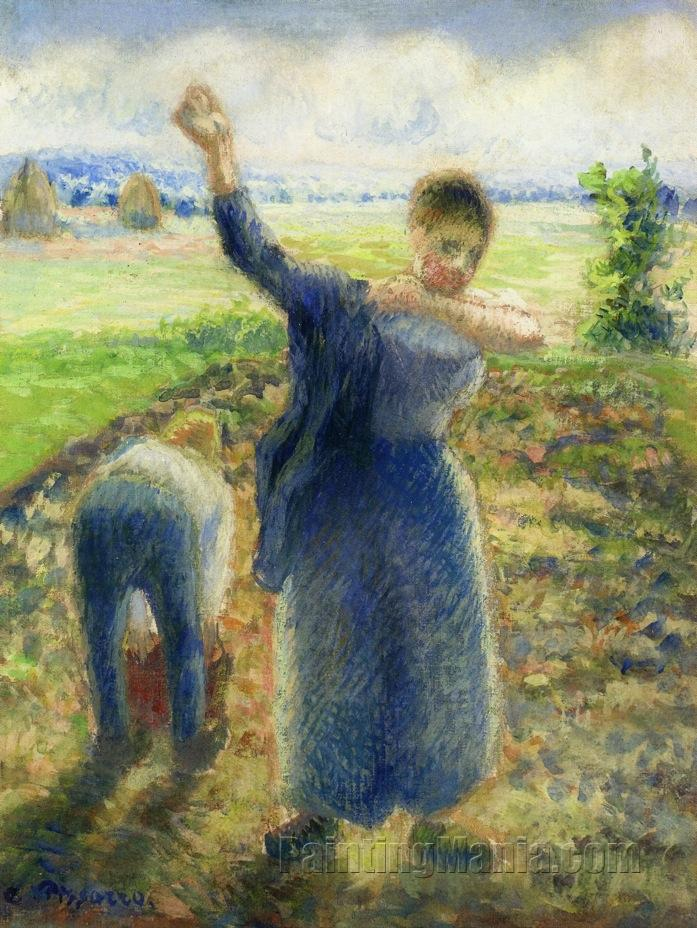 Workers in the Fields 1896-1897
