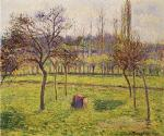 Apple Trees in a Field