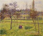 Apple Trees in a Field