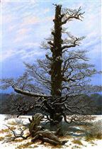 Oaktree in the Snow