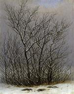 Trees and Shrubs under the Snow