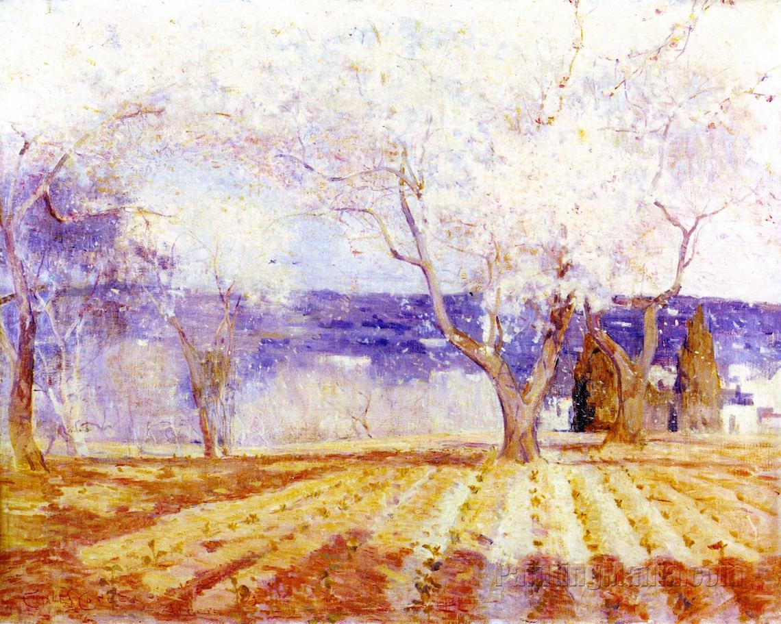Fruit Trees in Blossom, Algiers