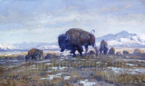 Buffalo Herd 1912