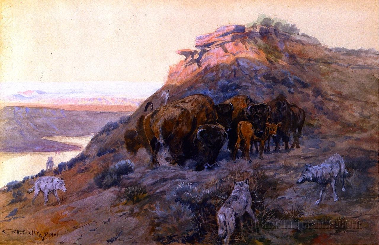 Buffalo Herd at Bay