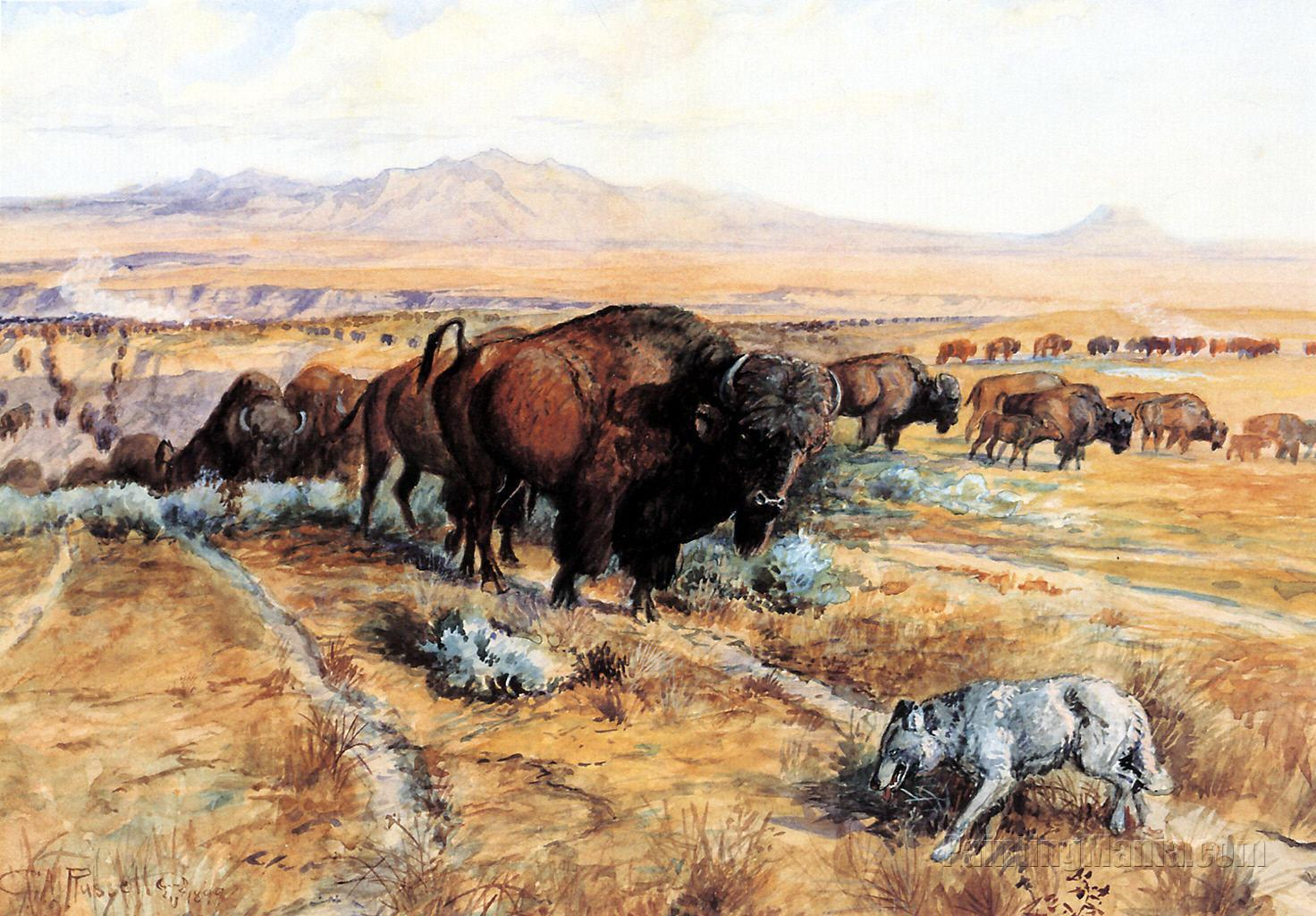 Guardian of the Herd - Charles Marion Russell Paintings