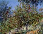 Apple Trees on the Chantemesle Hill