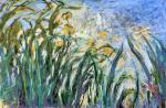Yellow Irises and Malva