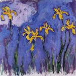Yellow Irises with Pink Cloud