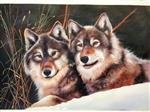Wolves in Love Lying on the Snow