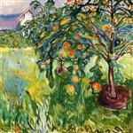 Apple Tree by the Studio