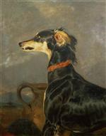 A Saluki Dog