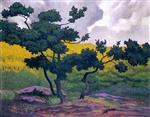 Landscape, Undergrowth