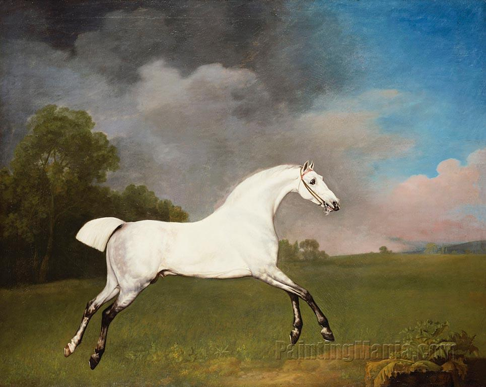 A Grey Horse 1793