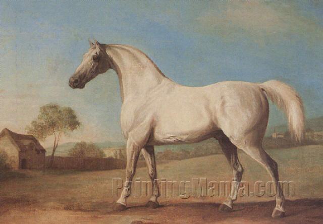 """Mambrino"", A Grey Stallion in a Field"