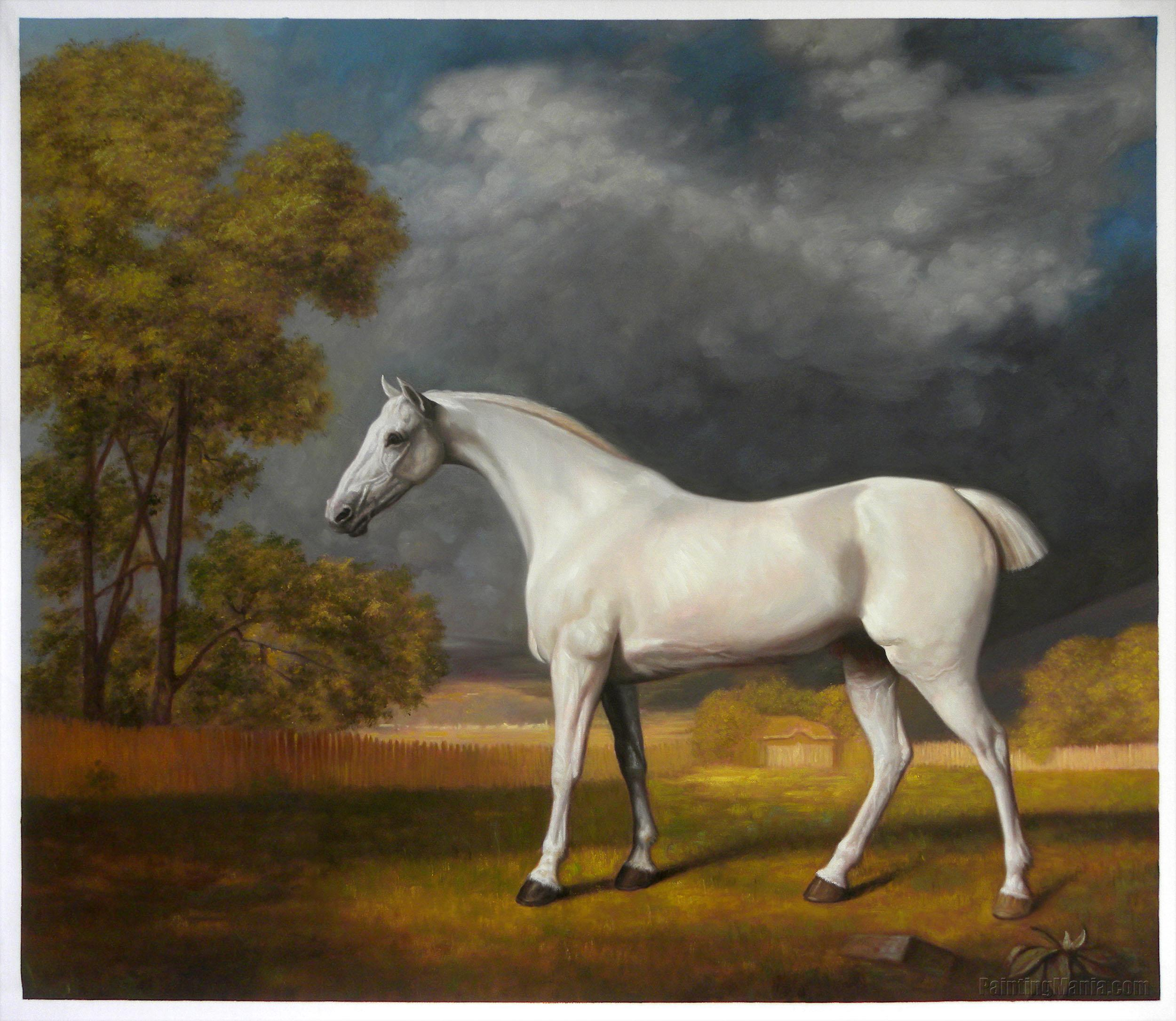 Mambrino (White Horse in a Paddock)