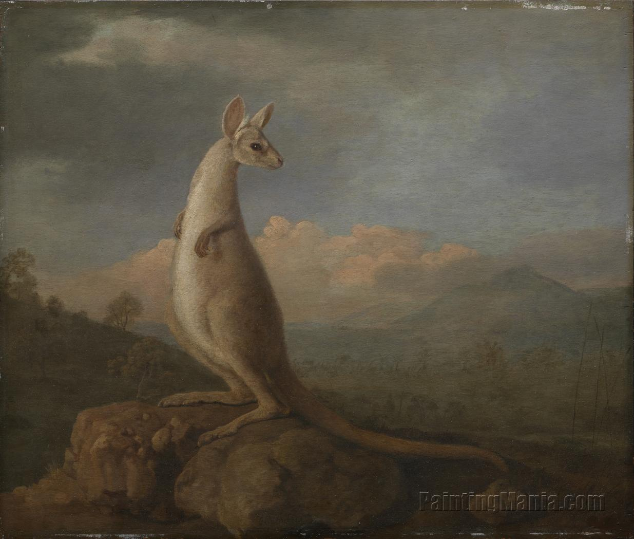 A Portrait of the Kongouro (Kangaroo) from New Holland