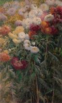 Chrysanthemums, Garden at Petit Gennevilliers