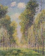 Alley of Poplars