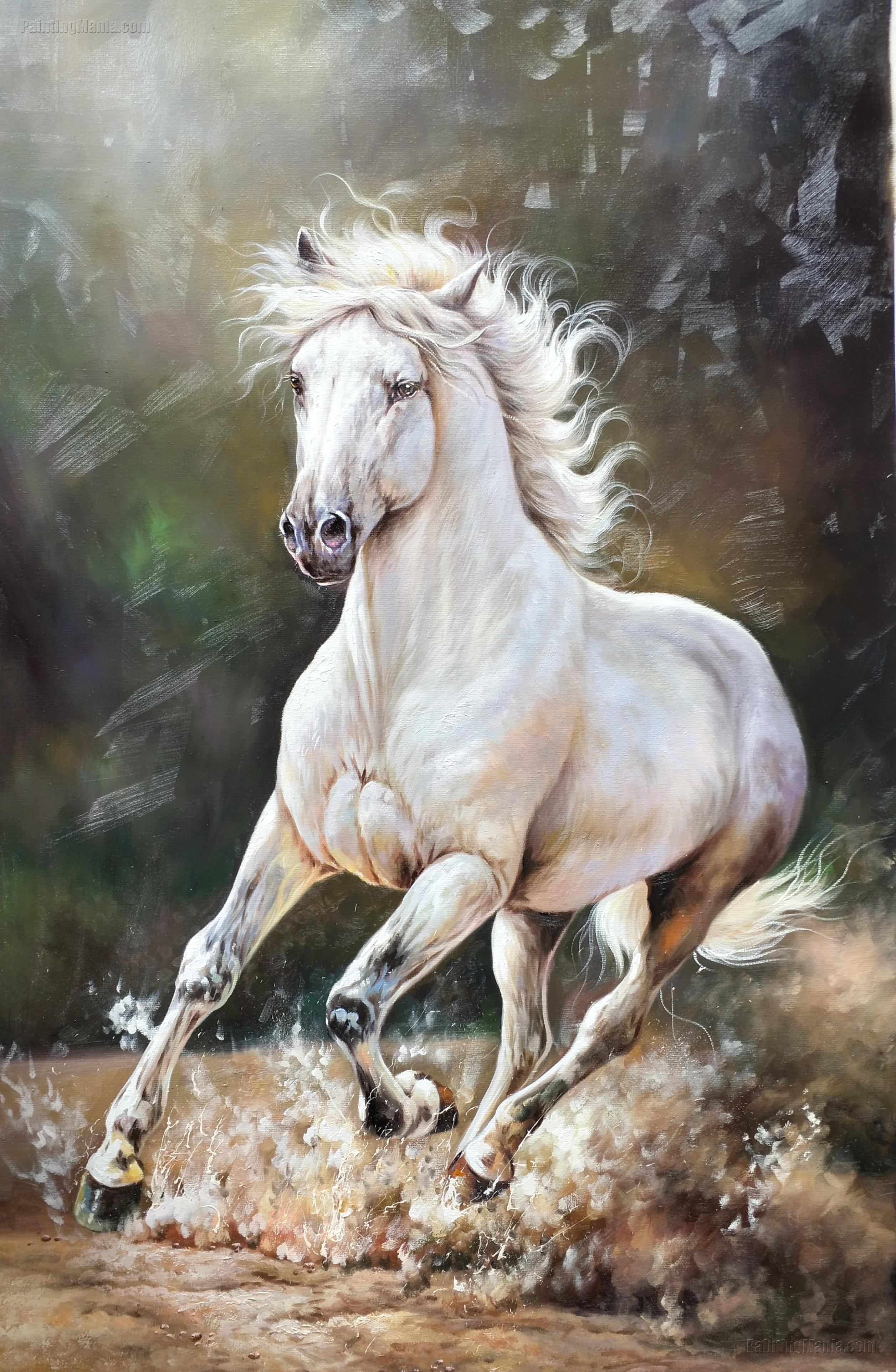 The White Horse Running Dust Horses Animals Paintings