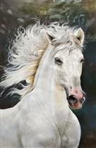 The Long Hair Beautiful White Horse