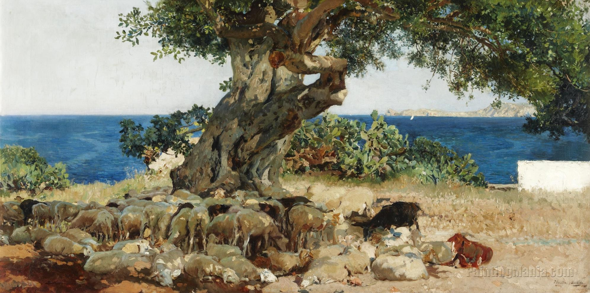 Algarrobo (The Carob Tree)