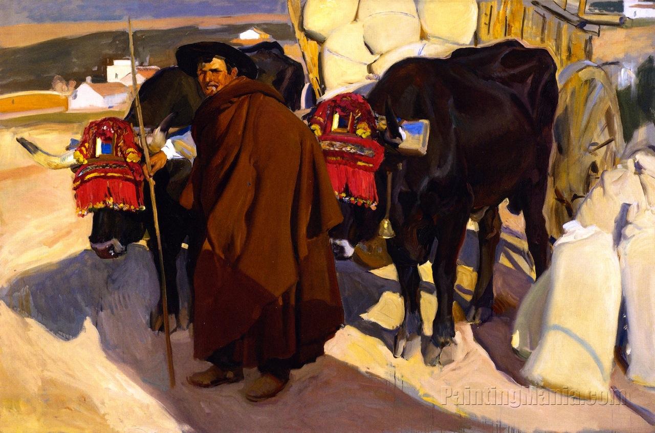 A Castilian Oxman