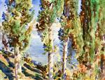 Corfu: Cypresses