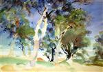 San Vigilio: Olive Trees