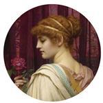 Chloris, A Summer Rose