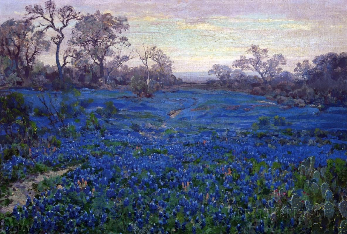 Bluebonnets at Twilight, near San Antonio