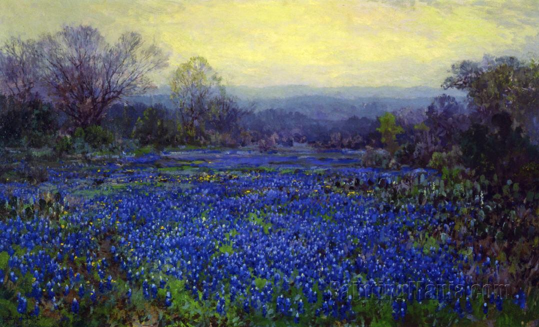 Field of Bluebonnets 1