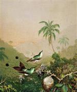 Brazilian Hummingbirds II
