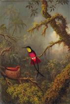 A Pair of nesting Crimson Topaz Hummingbirds