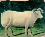 A Ram