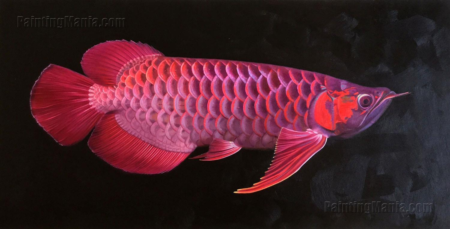 Red Dragon Fish,Scleropages legendrei, Asian Arowana, Red Arowana,Beautiful Tropical Fish ...