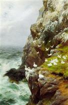 Gannets on a Rocky Cliff