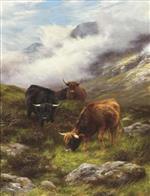 Highland Cattle Grazing on a Mist Covered Hillside
