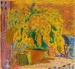 Bouquet de Mimosas