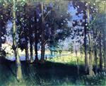 Landscape in Forest