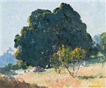 Afternoon Light (Blackwood Tree)