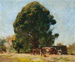 Blackwood, 'Longacres', Olinda