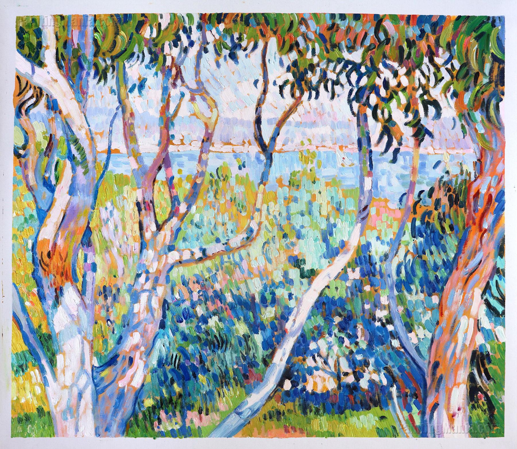 Eucalyptus, at Saint-Tropez