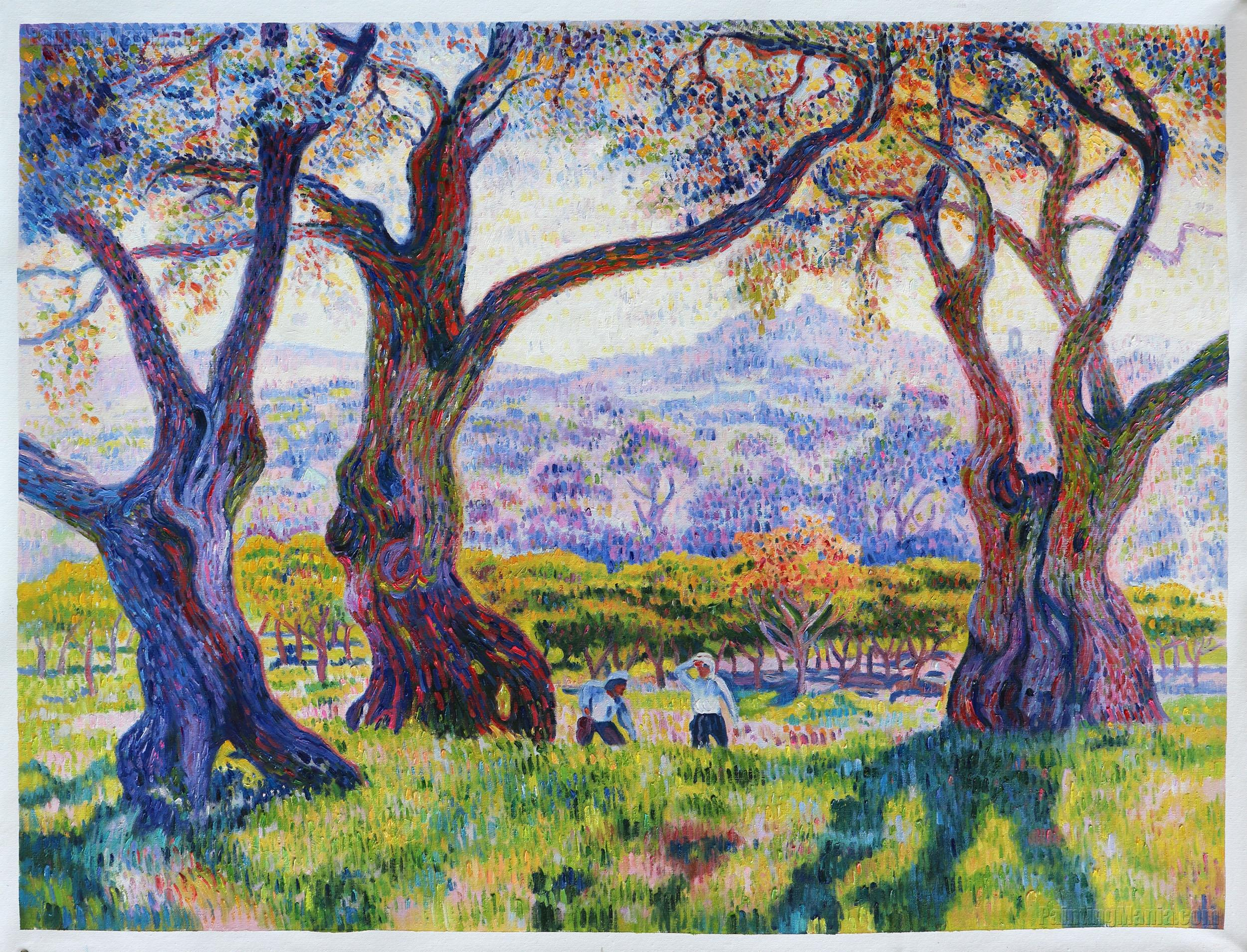 Olive Trees near Nice