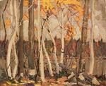 Autumn Birches and Poplars. Canoe Lake