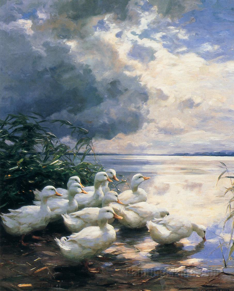 Ducks in the Morning