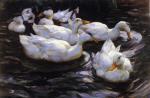 Six Ducks in a Pond
