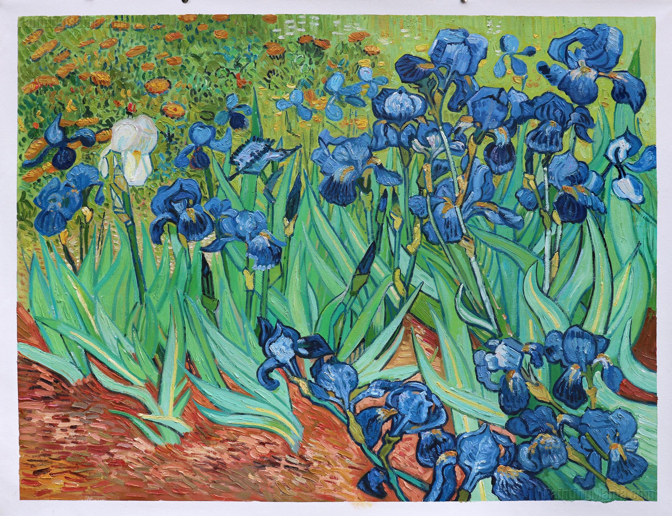 Irises (Getty)